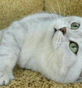 Резерв котят