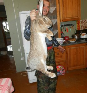 Продажа племенных породистых кроликов!!!!