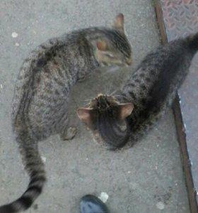 Кот и кошка марсик и муся