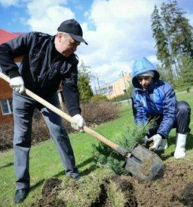 Дачные и домашние работы в саду и во дворе