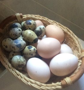 Яйцо домашнее куриное и перепелиное