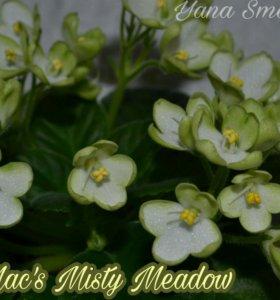 "Фиалка полу-мини ""Mac's Misty Meadow"""