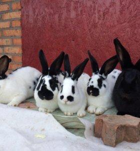 Продаю кроликов 🐇