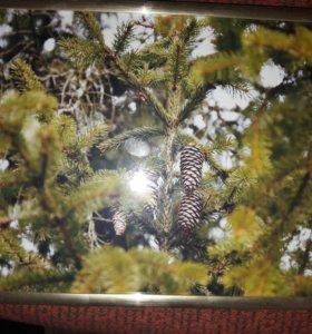 Фотография с рамкой