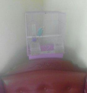 Волнистый попугай+ Клетка.
