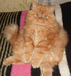 Ждём котика для вязки.
