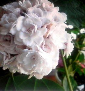 Отростки цветов