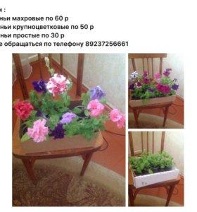 Цветы (петунья)
