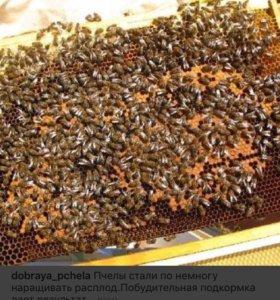 Куплю пчёл, расплоды, пчелопакеты, пчелосемьи.