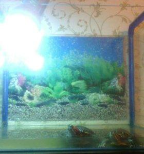 Аквариум 50л с черепахами
