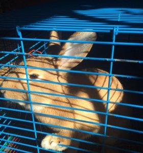 Кролик 1 год