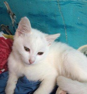Котёнок блондин