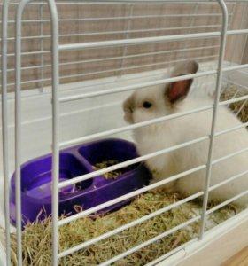 Карликовый кролик с клеткой