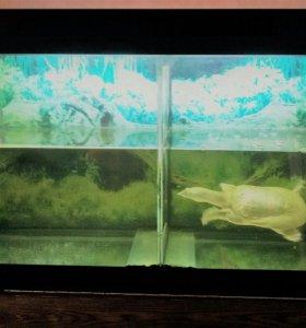 Аквариум на 300 литров +черепаха