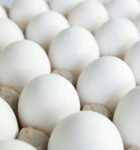 Домашние куриные яйца на еду.