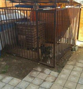 Вольер для собаки с будкой