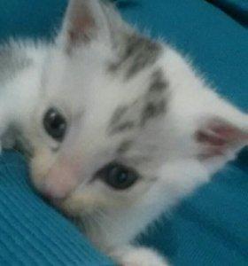 Котенок в добрые рукм