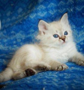Котёнок для Вас