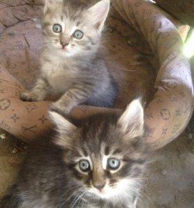 Котята в хорошие руки)