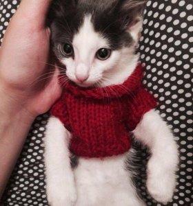 Отдам даром кошку