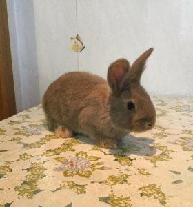 Мясные крольчата ( помесь )