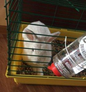 Кролик ,крольчиха,белка (дего)