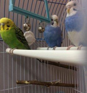 можете подобрать купить попугая в энгельсе правильно соединить трубы