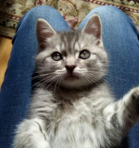 Маленький котенок