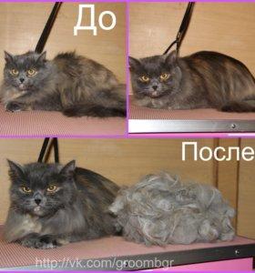Стрижка и экспресс линька для кошек