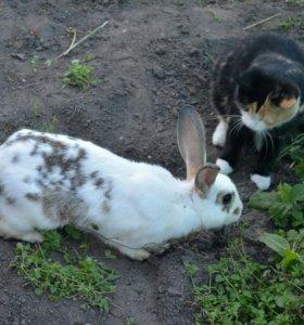 Кролики Сибирские