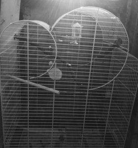 Клетка для попугая чик чирика)