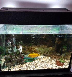 Аквариум 80л,одна рыба
