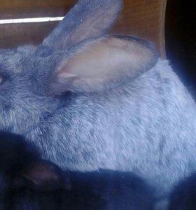 Кролики и клетки
