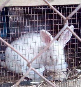 Продам 4х кроликов