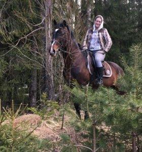 Лошадь в аренду и для занятий под любого всадника