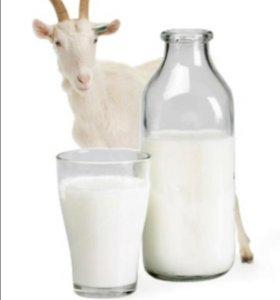 Домашнее молоко козы