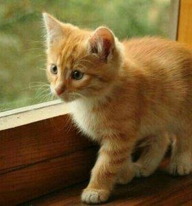 Ищу рыжего котёнка пишите в лс