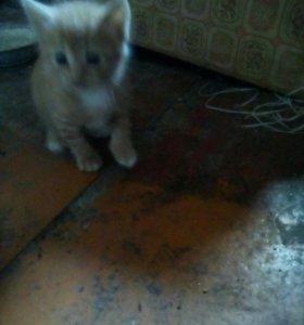 Котята отдадим даром. 1 рыжий котёнок и 2 кошки-