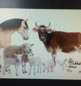 Корма для скота.