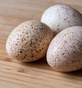 Продам индюшинные яйца.