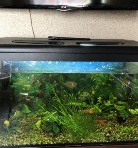 Аквариум 126 л с рыбками
