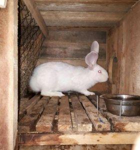 Продам кроликов