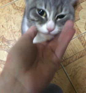 Кот бесплатно