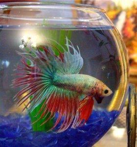 Аквариум и рыбка