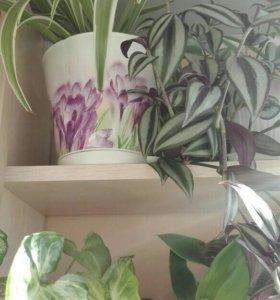 Комнатные растения цветы