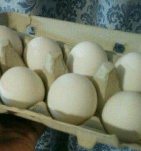 Диетическое куриное яйцо