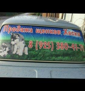 Продажа щенков Хаски