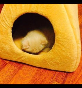 Дом для котиков