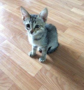 Отдам даром котенка