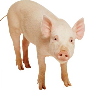 Мясо свинина крестьянка